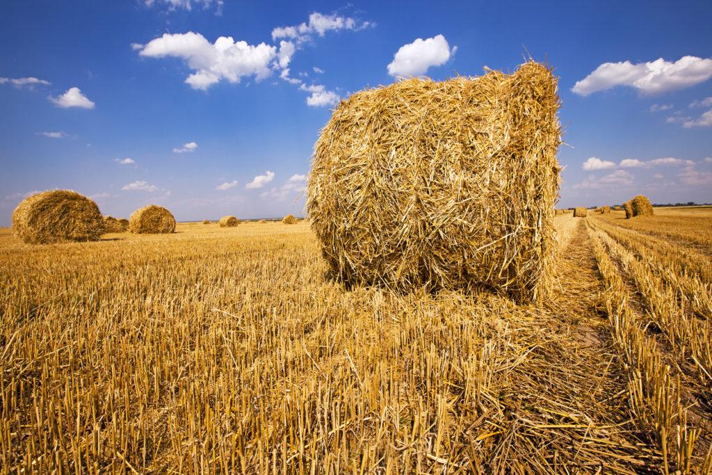 Korn og halmproduksjon på store åkre i USA står for en stor del av verdens matvareproduksjon. Foto: www.colourbox.com